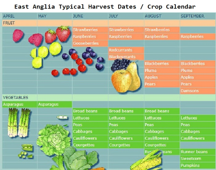 East Anglia Crop Harvest Calendar